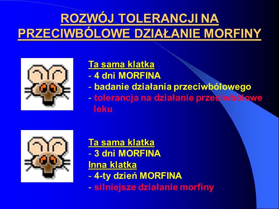 ROZWÓJ TOLERANCJI NA PRZECIWBÓLOWE DZIAŁANIE MORFINY Ta sama klatka - 4 dni MORFINA - badanie działania przeciwbólowego - tolerancja na działanie prze