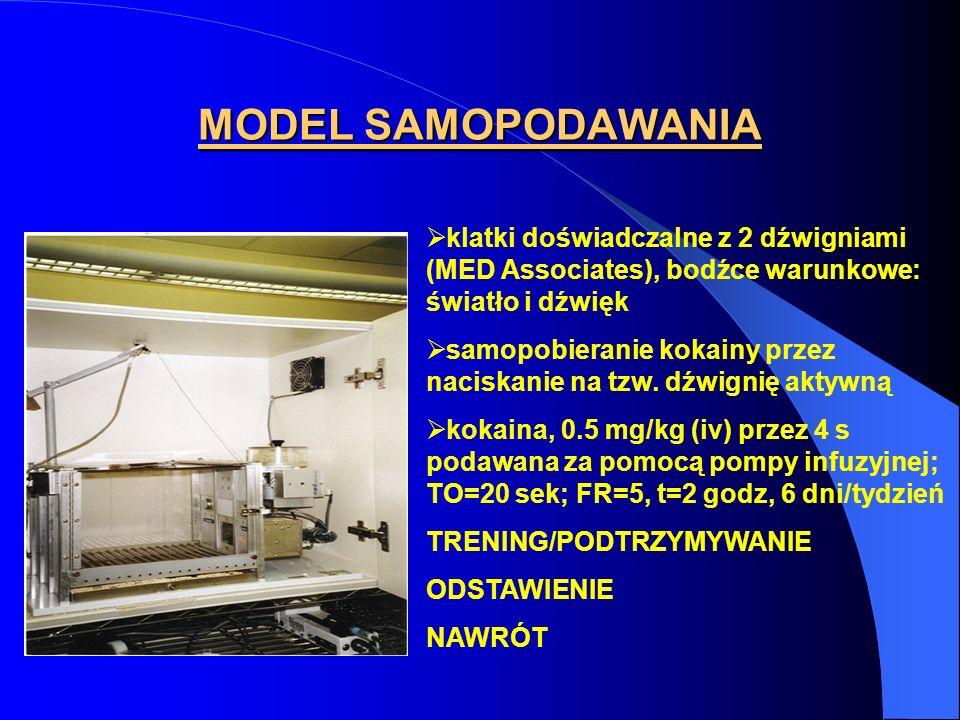 MODEL SAMOPODAWANIA klatki doświadczalne z 2 dźwigniami (MED Associates), bodźce warunkowe: światło i dźwięk samopobieranie kokainy przez naciskanie n