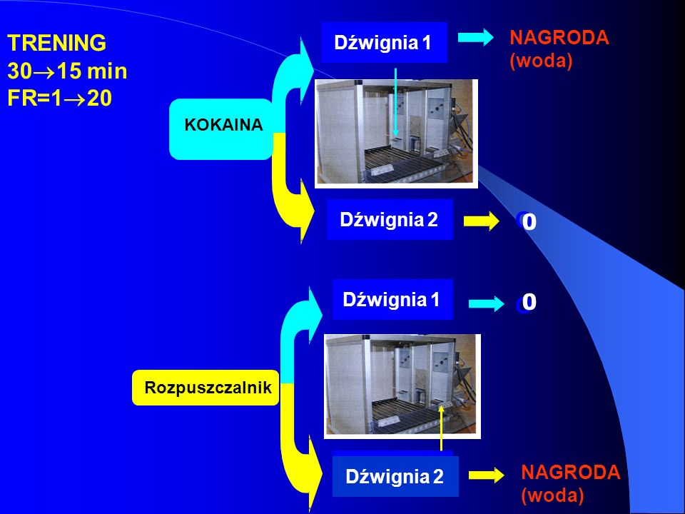 DŹWIGNIA 2 TRENING 30 15 min FR=1 20 KOKAINA Rozpuszczalnik Dźwignia 1 Dźwignia 2 Dźwignia 1 Dźwignia 2 NAGRODA (woda) NAGRODA (woda) O O Dźwignia 2 0