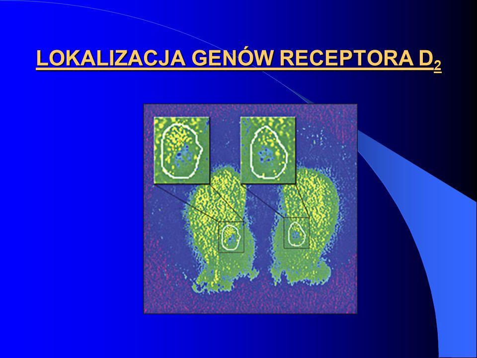 LOKALIZACJA GENÓW RECEPTORA D 2