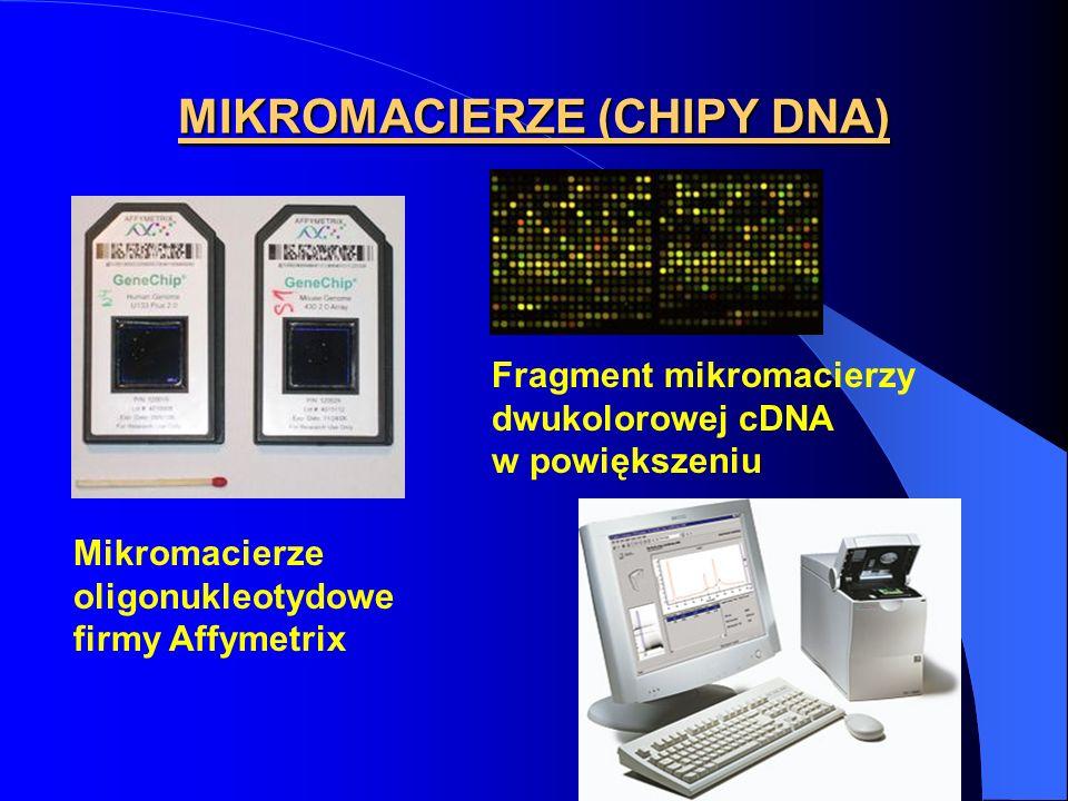 MIKROMACIERZE (CHIPY DNA) Mikromacierze oligonukleotydowe firmy Affymetrix Fragment mikromacierzy dwukolorowej cDNA w powiększeniu