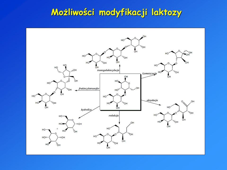 Możliwości modyfikacji laktozy