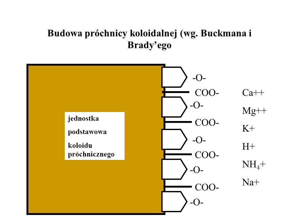 Budowa próchnicy koloidalnej (wg. Buckmana i Bradyego COO- -O- jednostka podstawowa koloidu próchnicznego Ca++ Mg++ K+ H+ NH 4 + Na+