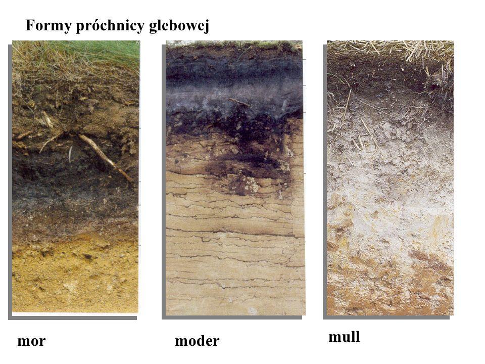 mormoder mull Formy próchnicy glebowej
