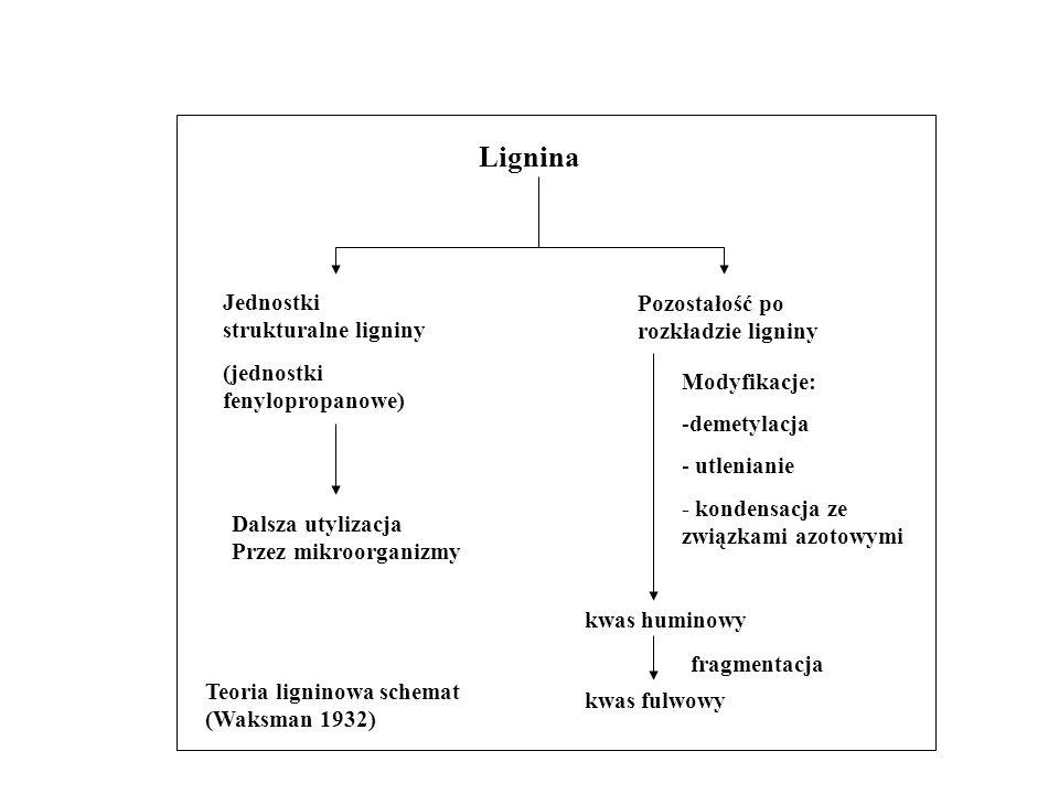 Lignina Jednostki strukturalne ligniny (jednostki fenylopropanowe) Dalsza utylizacja Przez mikroorganizmy Pozostałość po rozkładzie ligniny Modyfikacj