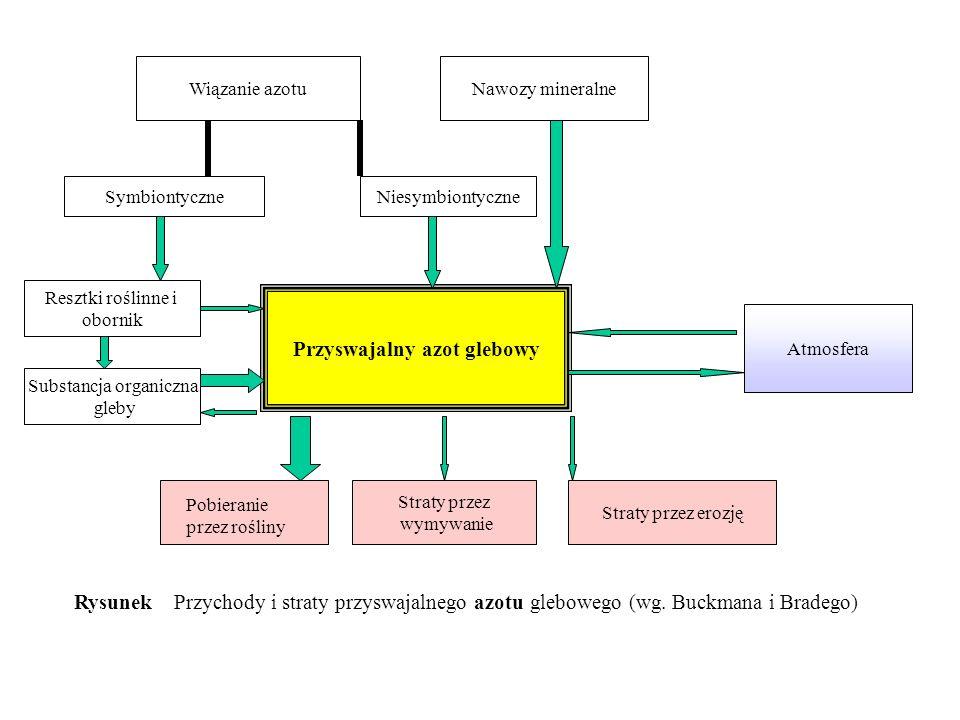 Przyswajalny azot glebowy Nawozy mineralneWiązanie azotu SymbiontyczneNiesymbiontyczne Resztki roślinne i obornik Substancja organiczna gleby Straty p