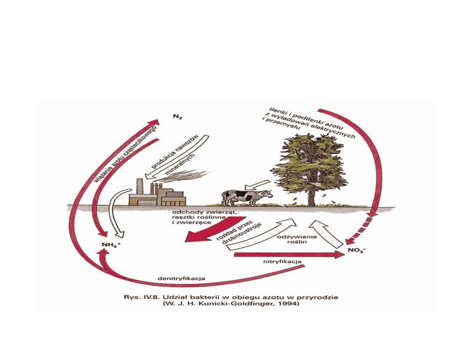 Proces murszotwórczy- polega na zmianie natury fizycznej i chemicznej torfu w wyniku jego przesuszenia.