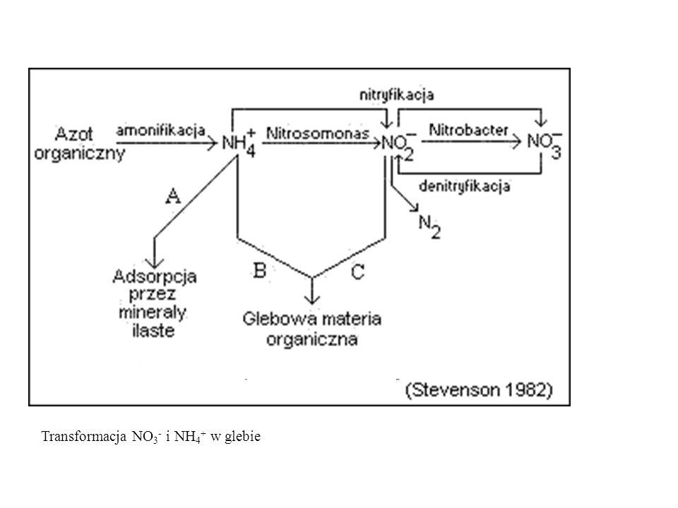 Azot w glebie Dostępność dla roślin azotu uwalnianego podczas rozkładu szczątków roślinnych zależy: od stosunku C:N rozkładającej się substancji organicznej.