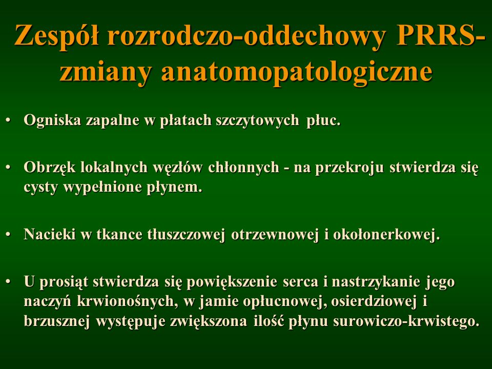 Zespół rozrodczo-oddechowy PRRS- zmiany anatomopatologiczne Zespół rozrodczo-oddechowy PRRS- zmiany anatomopatologiczne Ogniska zapalne w płatach szcz