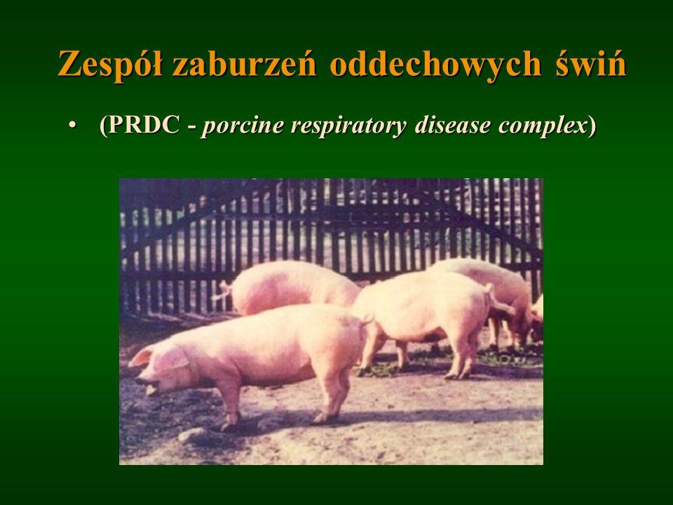 Zespół zaburzeń oddechowych świń (PRDC - porcine respiratory disease complex) (PRDC - porcine respiratory disease complex)