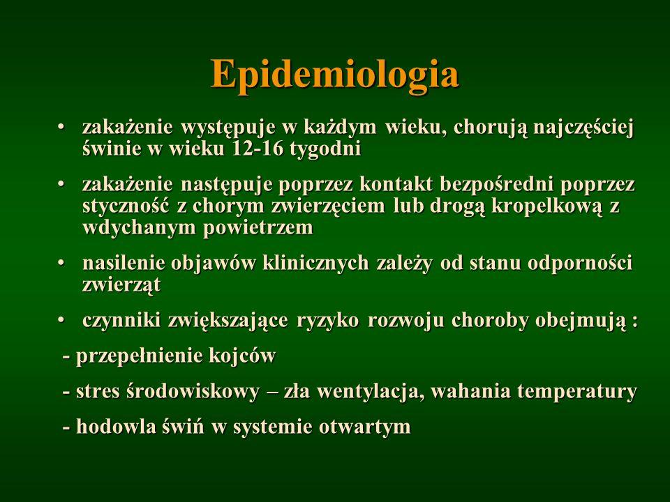 Epidemiologia zakażenie występuje w każdym wieku, chorują najczęściej świnie w wieku 12-16 tygodnizakażenie występuje w każdym wieku, chorują najczęśc