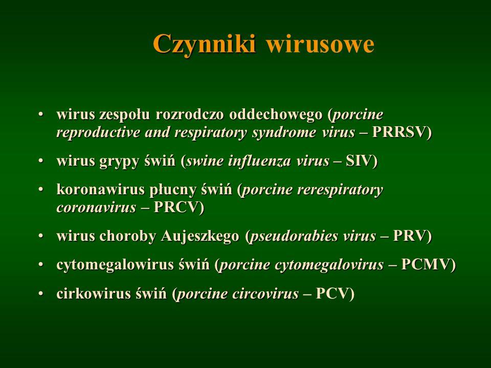 Czynniki Czynniki wirusowe wirus zespołu rozrodczo oddechowego (porcine reproductive and respiratory syndrome virus – PRRSV)wirus zespołu rozrodczo od