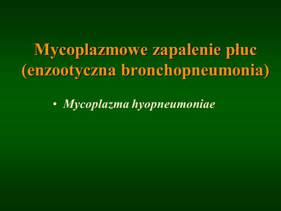 Mycoplazmowe zapalenie płuc (enzootyczna bronchopneumonia) Mycoplazma hyopneumoniae