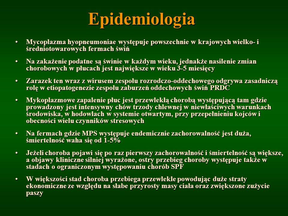Epidemiologia Mycoplazma hyopneumoniae występuje powszechnie w krajowych wielko- i średniotowarowych fermach świńMycoplazma hyopneumoniae występuje po