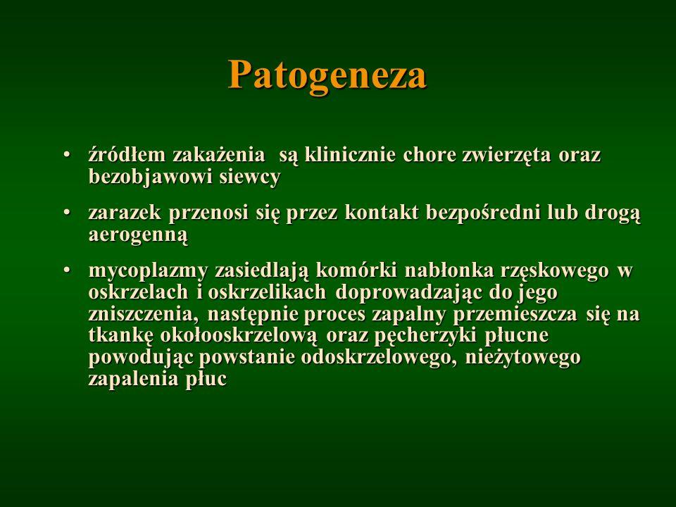 Patogeneza źródłem zakażenia są klinicznie chore zwierzęta oraz bezobjawowi siewcyźródłem zakażenia są klinicznie chore zwierzęta oraz bezobjawowi sie