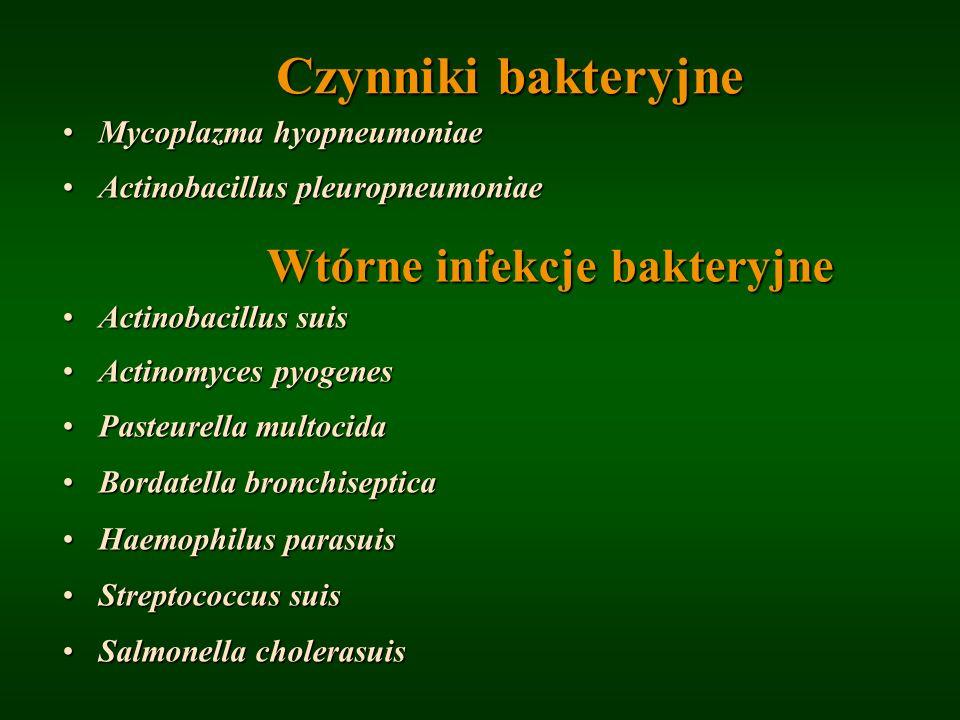 Czynniki bakteryjne Mycoplazma hyopneumoniaeMycoplazma hyopneumoniae Actinobacillus pleuropneumoniaeActinobacillus pleuropneumoniae Wtórne infekcje ba