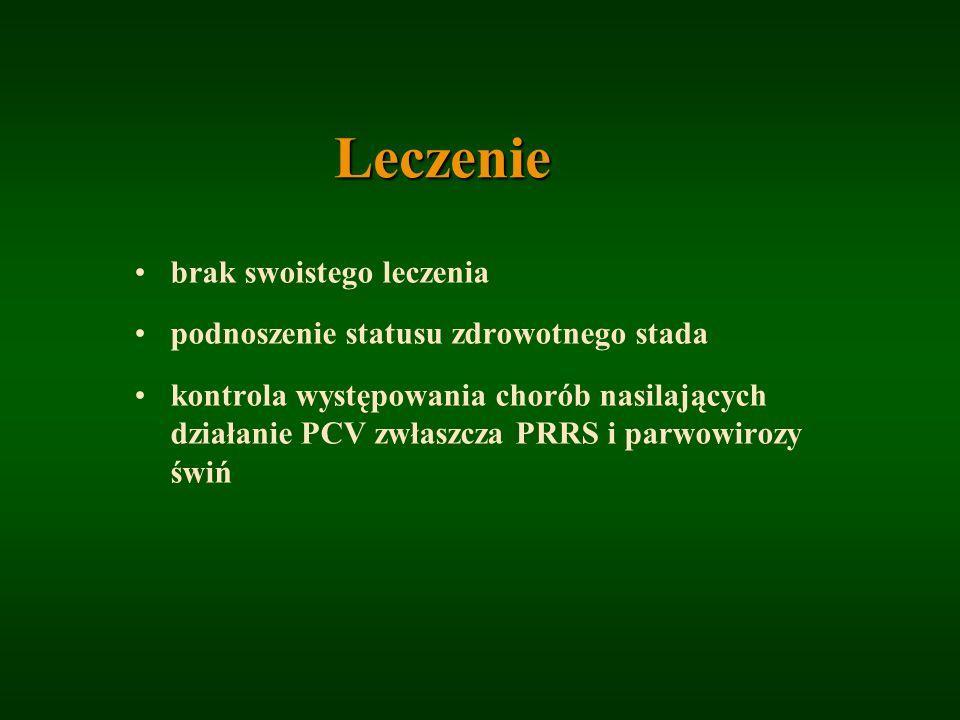 Leczenie brak swoistego leczenia podnoszenie statusu zdrowotnego stada kontrola występowania chorób nasilających działanie PCV zwłaszcza PRRS i parwow