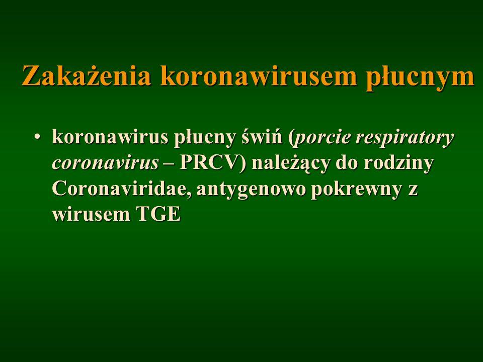 Zakażenia koronawirusem płucnym koronawirus płucny świń (porcie respiratory coronavirus – PRCV) należący do rodziny Coronaviridae, antygenowo pokrewny
