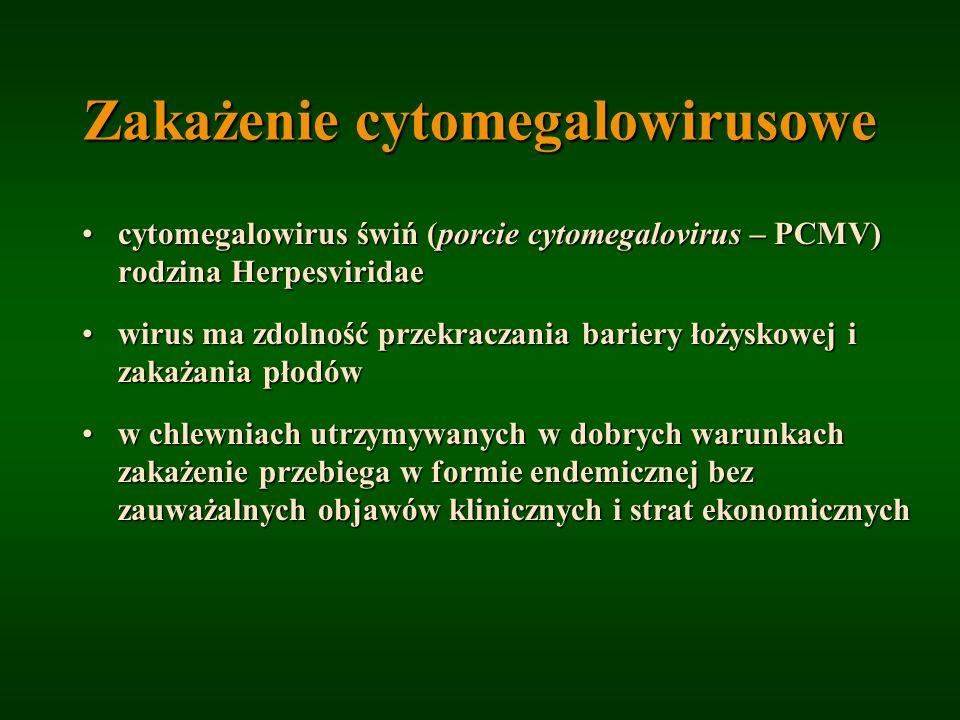 Zakażenie cytomegalowirusowe cytomegalowirus świń (porcie cytomegalovirus – PCMV) rodzina Herpesviridaecytomegalowirus świń (porcie cytomegalovirus –