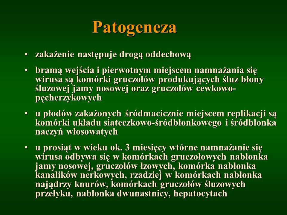 Patogeneza zakażenie następuje drogą oddechowązakażenie następuje drogą oddechową bramą wejścia i pierwotnym miejscem namnażania się wirusa są komórki