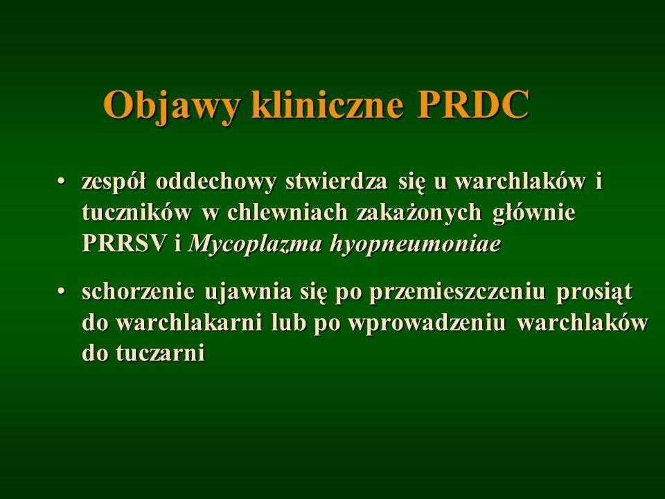 Objawy kliniczne PRDC zespół oddechowy stwierdza się u warchlaków i tuczników w chlewniach zakażonych głównie PRRSV i Mycoplazma hyopneumoniaezespół o