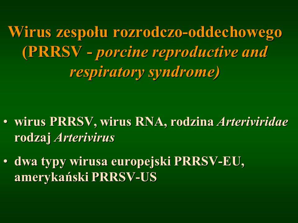 Wirus zespołu rozrodczo-oddechowego (PRRSV - porcine reproductive and respiratory syndrome) wirus PRRSV, wirus RNA, rodzina Arteriviridae rodzaj Arter