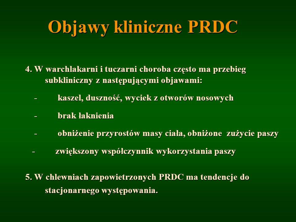 Objawy kliniczne PRDC 4. W warchlakarni i tuczarni choroba często ma przebieg subkliniczny z następującymi objawami: - kaszel, duszność, wyciek z otwo