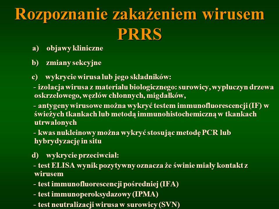 Rozpoznanie zakażeniem wirusem PRRS a) objawy kliniczne a) objawy kliniczne b) zmiany sekcyjne b) zmiany sekcyjne c) wykrycie wirusa lub jego składnik