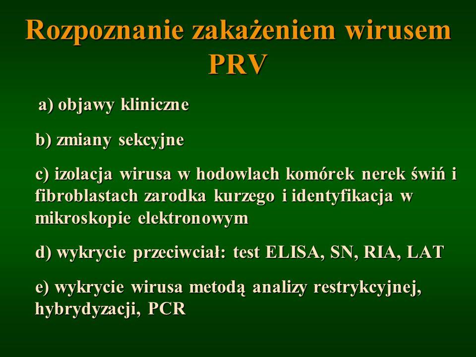 Rozpoznanie zakażeniem wirusem PRV a) objawy kliniczne b) zmiany sekcyjne b) zmiany sekcyjne c) izolacja wirusa w hodowlach komórek nerek świń i fibro