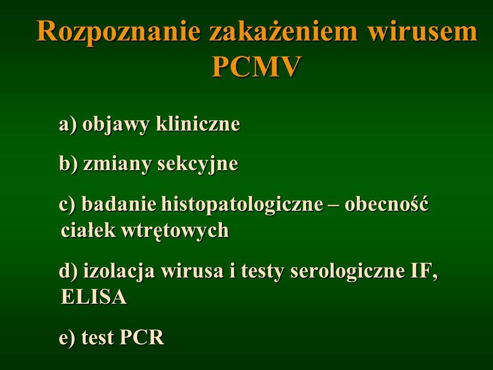 Rozpoznanie zakażeniem wirusem PCMV a) objawy kliniczne b) zmiany sekcyjne b) zmiany sekcyjne c) badanie histopatologiczne – obecność ciałek wtrętowyc