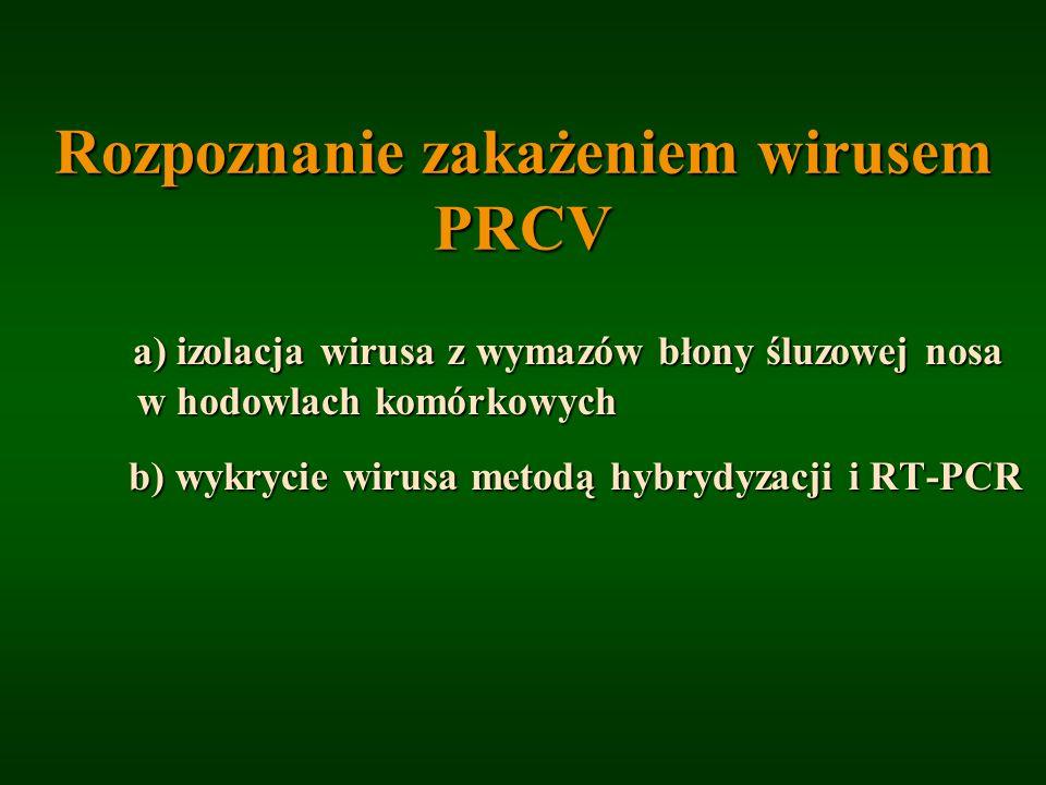 Rozpoznanie zakażeniem wirusem PRCV a) izolacja wirusa z wymazów błony śluzowej nosa w hodowlach komórkowych b) wykrycie wirusa metodą hybrydyzacji i