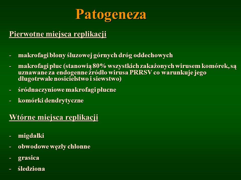 Patogeneza Pierwotne miejsca replikacji -makrofagi błony śluzowej górnych dróg oddechowych -makrofagi płuc (stanowią 80% wszystkich zakażonych wirusem