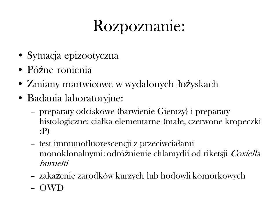 Rozpoznanie: Sytuacja epizootyczna Pó ź ne ronienia Zmiany martwicowe w wydalonych ł o ż yskach Badania laboratoryjne: –preparaty odciskowe (barwienie