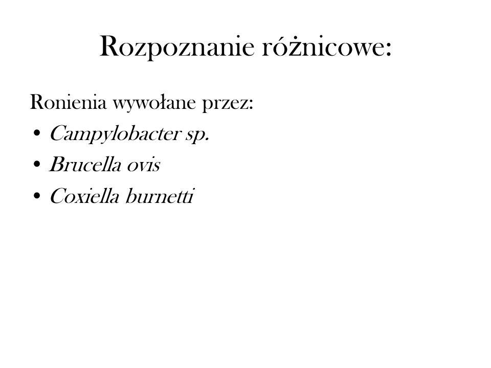 Rozpoznanie ró ż nicowe: Ronienia wywo ł ane przez: Campylobacter sp. Brucella ovis Coxiella burnetti