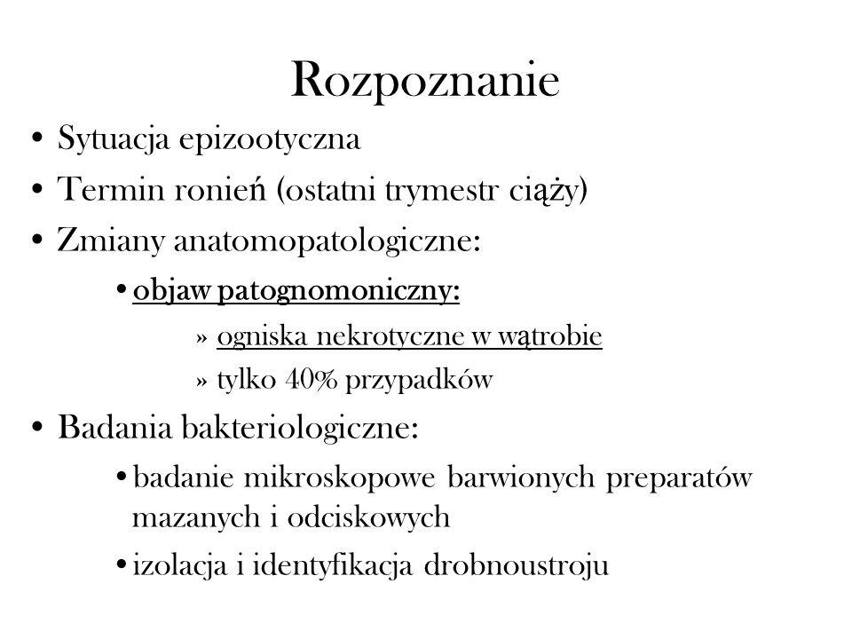 Rozpoznanie Sytuacja epizootyczna Termin ronie ń (ostatni trymestr ci ąż y) Zmiany anatomopatologiczne: objaw patognomoniczny: »ogniska nekrotyczne w