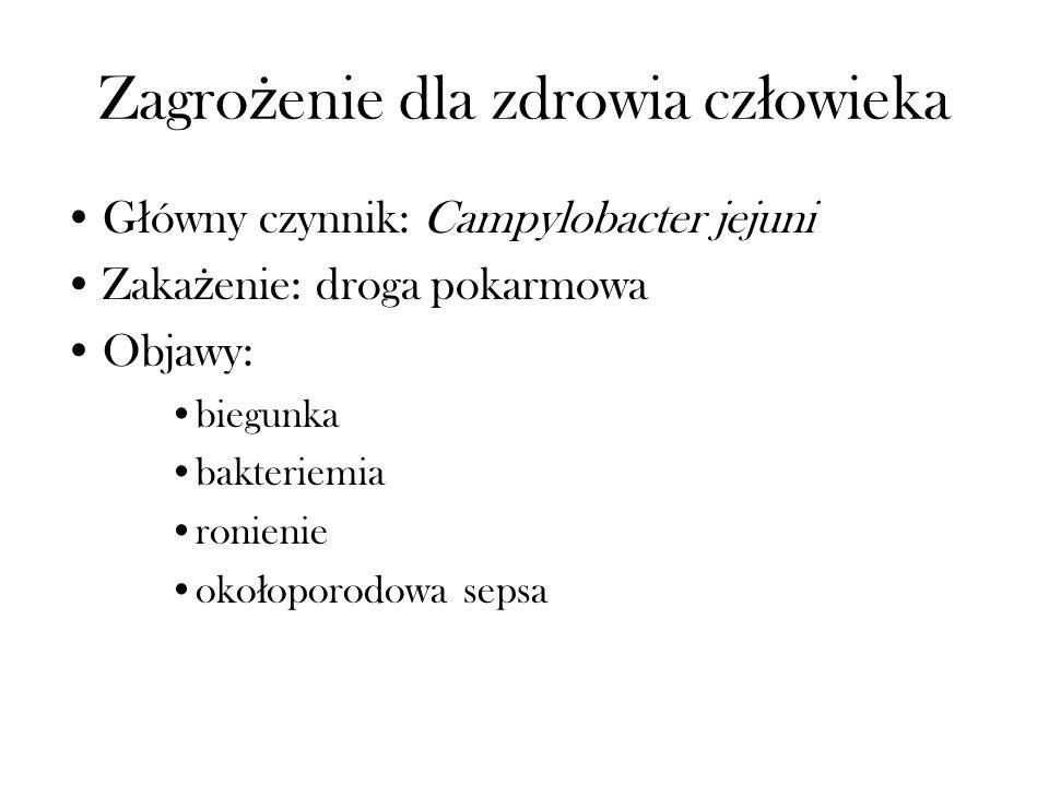Zagro ż enie dla zdrowia cz ł owieka G ł ówny czynnik: Campylobacter jejuni Zaka ż enie: droga pokarmowa Objawy: biegunka bakteriemia ronienie oko ł o