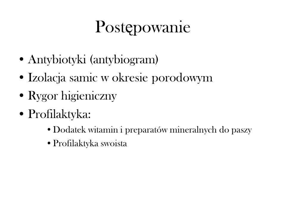 Post ę powanie Antybiotyki (antybiogram) Izolacja samic w okresie porodowym Rygor higieniczny Profilaktyka: Dodatek witamin i preparatów mineralnych d