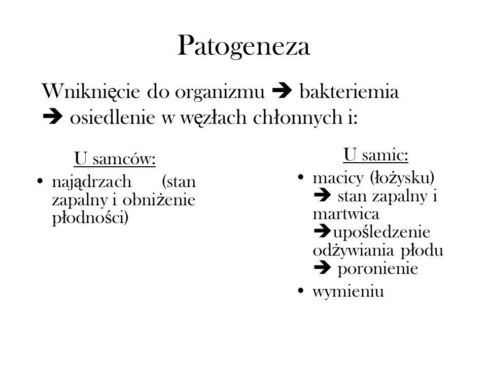 Patogeneza U samców: naj ą drzach (stan zapalny i obni ż enie p ł odno ś ci) U samic: macicy ( ł o ż ysku) stan zapalny i martwica upo ś ledzenie od ż