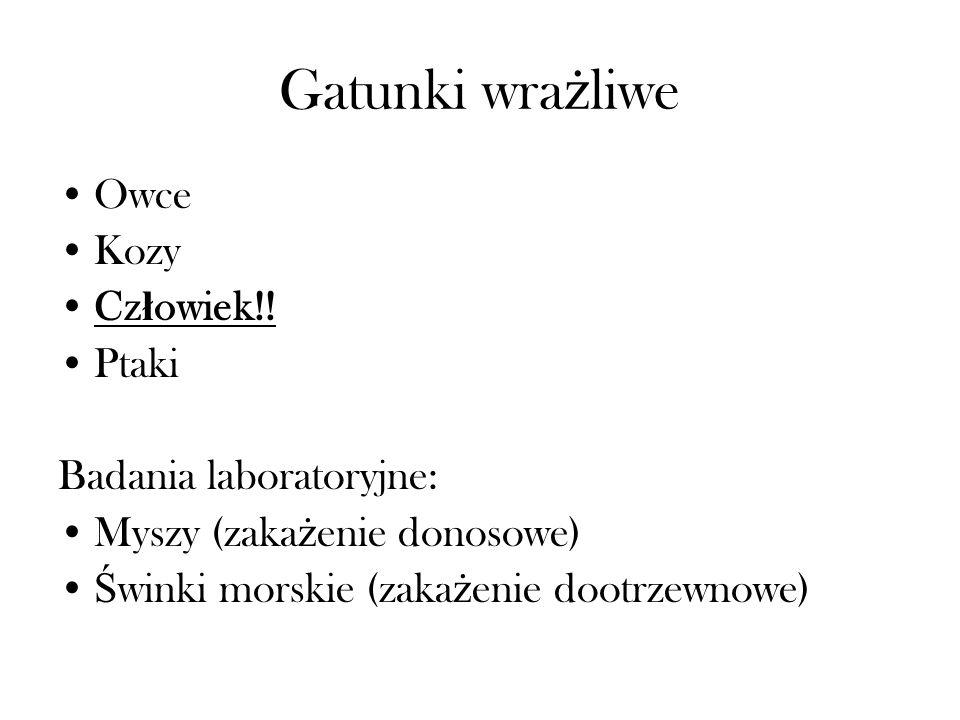 Etiologia Bakterie: Campylobacter fetus subsp.