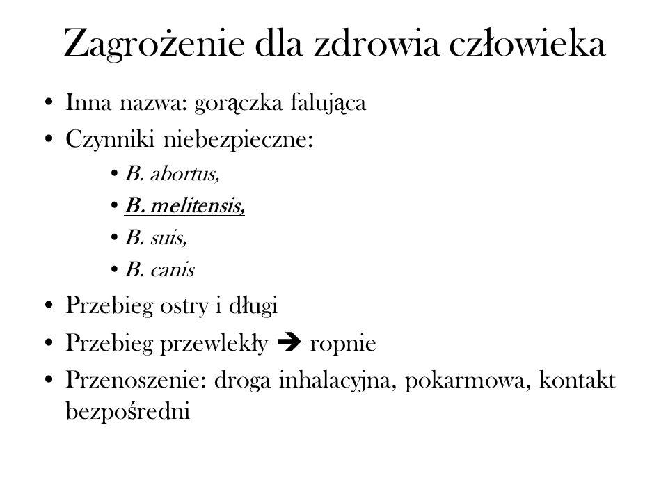 Zagro ż enie dla zdrowia cz ł owieka Inna nazwa: gor ą czka faluj ą ca Czynniki niebezpieczne: B. abortus, B. melitensis, B. suis, B. canis Przebieg o