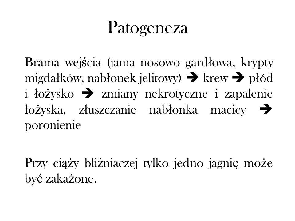 Salmonelloza Inne nazwy: paratyfus owiec ( ł ac.) salmonellosis ovum (ang.) salmonella abortion in sheep (ros.) paratif (ros.) paratifoznyj abort