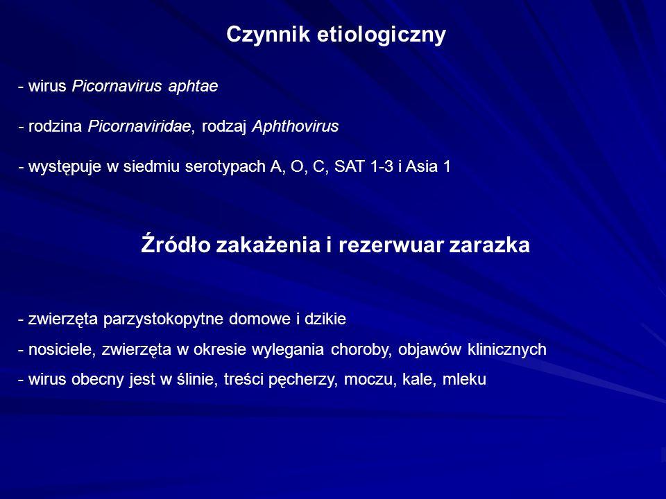 - wirus Picornavirus aphtae - rodzina Picornaviridae, rodzaj Aphthovirus - występuje w siedmiu serotypach A, O, C, SAT 1-3 i Asia 1 Czynnik etiologiczny Źródło zakażenia i rezerwuar zarazka - zwierzęta parzystokopytne domowe i dzikie - nosiciele, zwierzęta w okresie wylegania choroby, objawów klinicznych - wirus obecny jest w ślinie, treści pęcherzy, moczu, kale, mleku