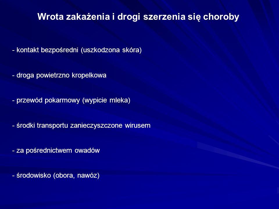 Wrota zakażenia i drogi szerzenia się choroby - kontakt bezpośredni (uszkodzona skóra) - droga powietrzno kropelkowa - przewód pokarmowy (wypicie mleka) - środki transportu zanieczyszczone wirusem - za pośrednictwem owadów - środowisko (obora, nawóz)