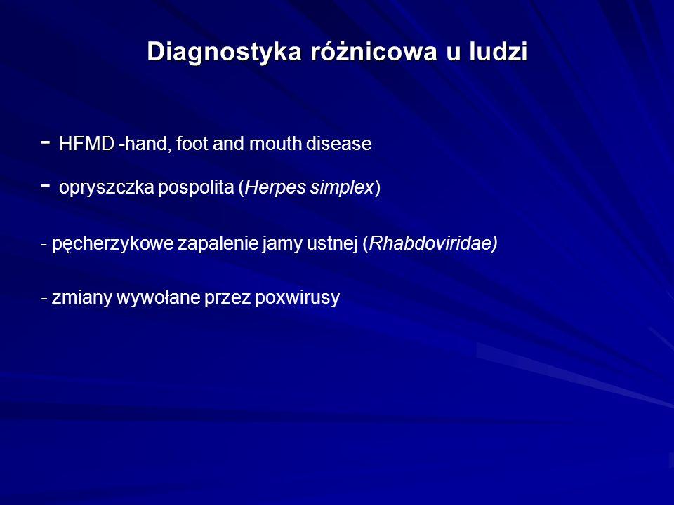 Diagnostyka różnicowa u ludzi - HFMD - - HFMD -hand, foot and mouth disease - opryszczka pospolita (Herpes simplex) - pęcherzykowe zapalenie jamy ustnej (Rhabdoviridae) - zmiany wywołane przez poxwirusy