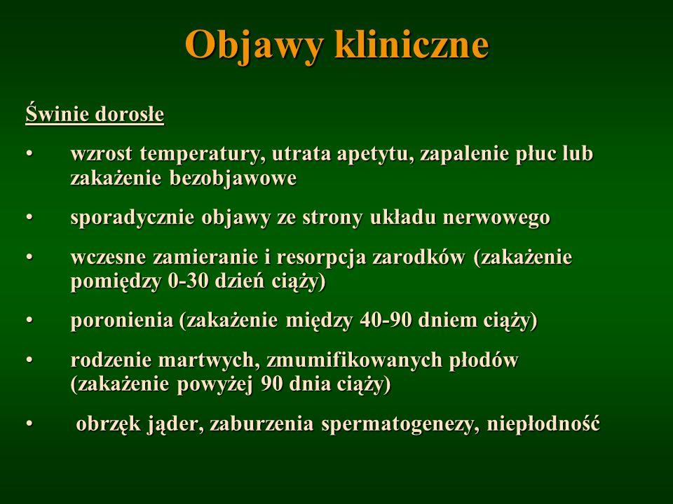 Objawy kliniczne Świnie dorosłe wzrost temperatury, utrata apetytu, zapalenie płuc lub zakażenie bezobjawowewzrost temperatury, utrata apetytu, zapale