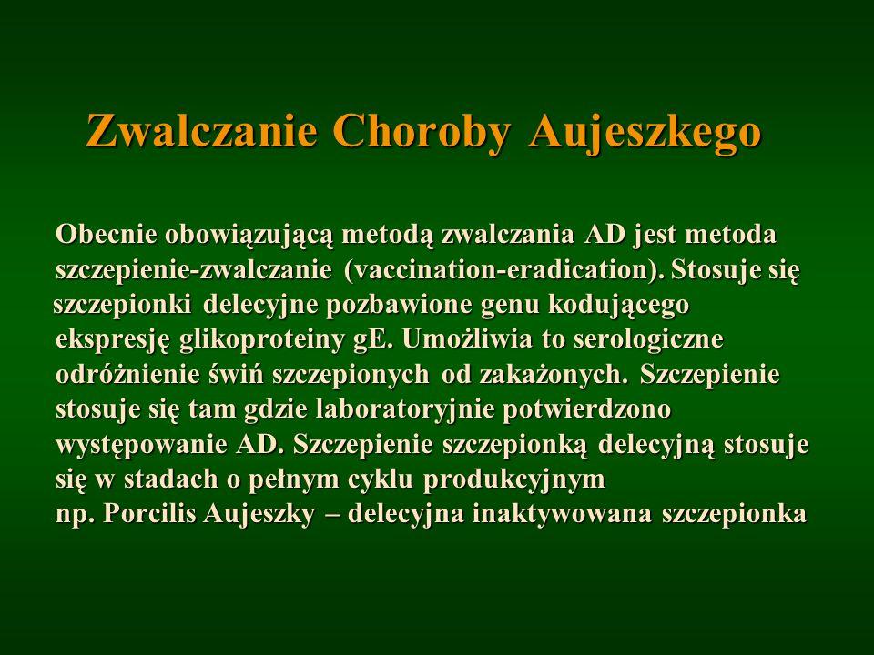 Zwalczanie Choroby Aujeszkego Obecnie obowiązującą metodą zwalczania AD jest metoda Obecnie obowiązującą metodą zwalczania AD jest metoda szczepienie-