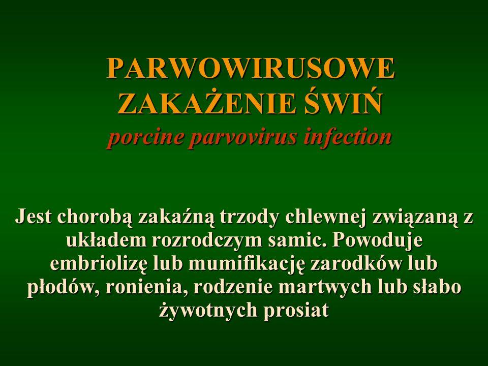 PARWOWIRUSOWE ZAKAŻENIE ŚWIŃ porcine parvovirus infection Jest chorobą zakaźną trzody chlewnej związaną z układem rozrodczym samic. Powoduje embrioliz