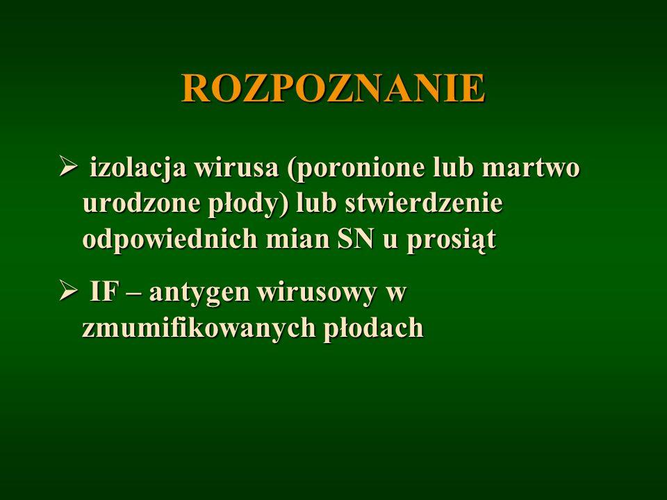 ROZPOZNANIE izolacja wirusa (poronione lub martwo urodzone płody) lub stwierdzenie odpowiednich mian SN u prosiąt izolacja wirusa (poronione lub martw