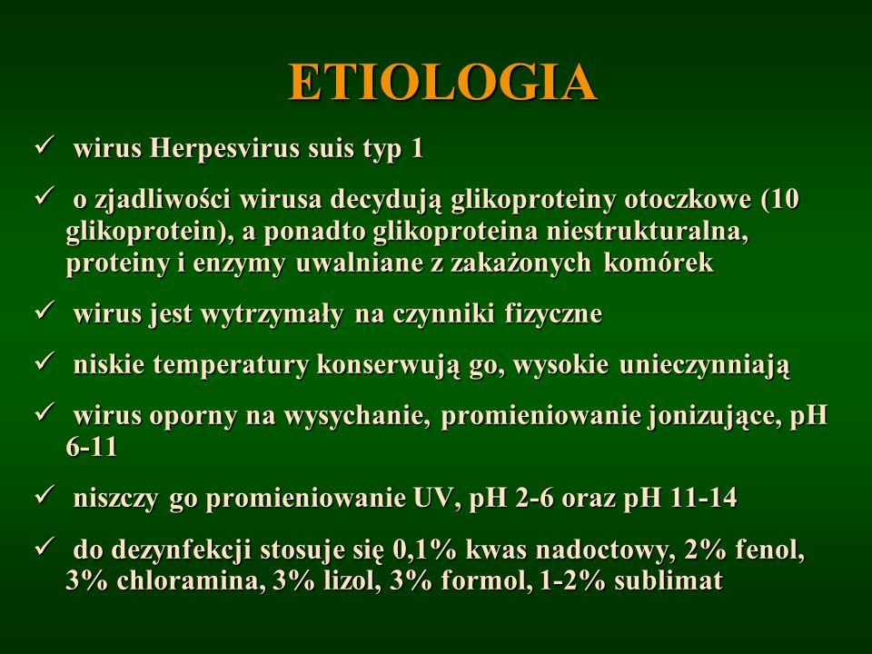 ETIOLOGIA wirus Herpesvirus suis typ 1 wirus Herpesvirus suis typ 1 o zjadliwości wirusa decydują glikoproteiny otoczkowe (10 glikoprotein), a ponadto