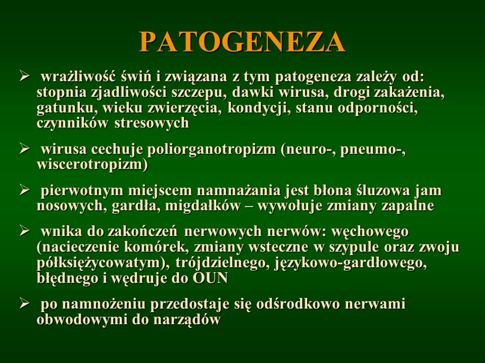 PATOGENEZA wrażliwość świń i związana z tym patogeneza zależy od: stopnia zjadliwości szczepu, dawki wirusa, drogi zakażenia, gatunku, wieku zwierzęci
